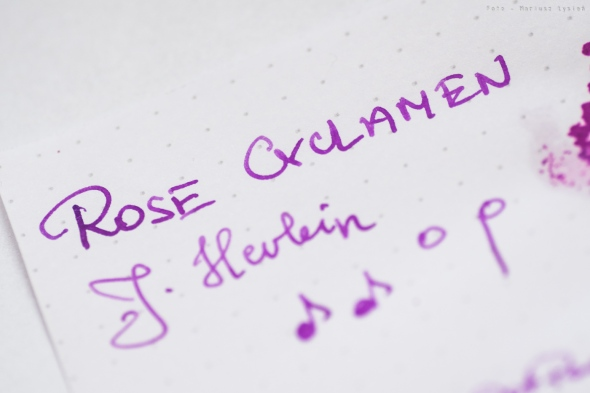jherbin_rose_cyclamen_sm-2