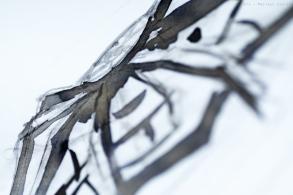 montblanc_spider_grey_heritage_prsm-22