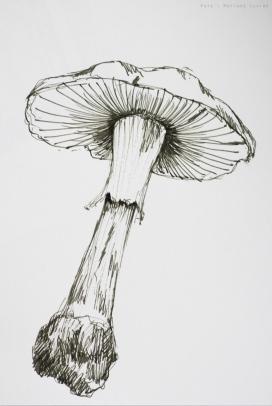 rohrer_klinger_sketch_ink_lilly_sm-19