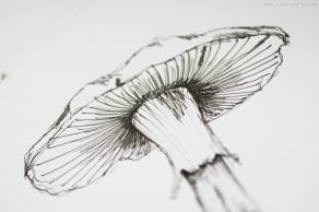 rohrer_klinger_sketch_ink_lilly_sm-21