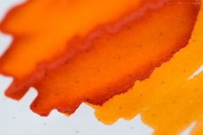 montblanc_manganese_orange_sm-7