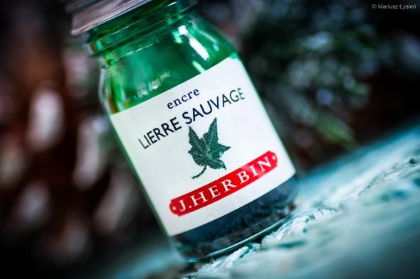 herbin_lierre_sauvage_test_sm-2