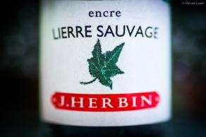 herbin_lierre_sauvage_test_sm-4